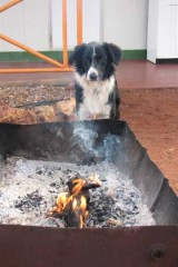 Dogs love camp fires too! - [Click for a Larger Image]